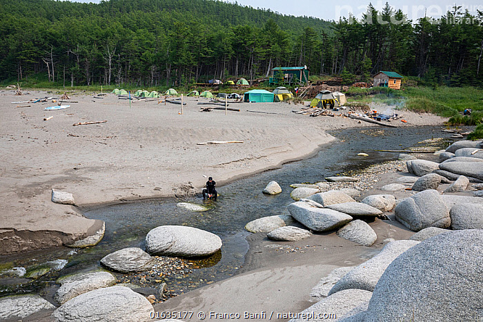 Person in river flowing through beach. Camp with tents in background, gathering to watch yearly congregation of Bowhead whales (Balaena mysticetus). Primorsky Krai, Russia. August 2019.  ,  People,Russia,Tent,Rock,Boulder,Boulders,Flowing Water,River,Coast,Coniferous forest,Freshwater,Coastal,Water,Forest,Russian Far East,Wildlife watching,Primorsky Krai,Far East Federal District,North Asia,Asian Russia,  ,  Franco  Banfi