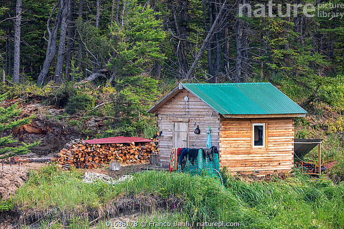 Sauna hut / banja and logpile at camp in Vrangel Bay where Bowhead whale (Balaena mysticetus) congregate every summer. Primorsky Krai, Russia. August 2019.  ,  Russia,Building,Leisure Facilities,Recreational Building,Recreational Buildings,Recreational Built Work,Recreational Structure,Recreational Structures,Sauna,Saunas,Steam Room,Steam Rooms,Hut,Huts,Russian Far East,Primorsky Krai,Far East Federal District,North Asia,Asian Russia,  ,  Franco  Banfi
