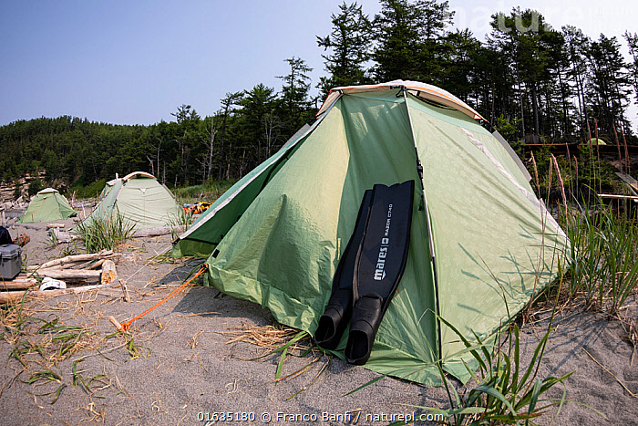Diving fins resting against tent on beach with coniferous forest in background. In Vrangel Bay where Bowhead whale (Balaena mysticetus) congregate in summer. Primorsky Krai, Russia. August 2019.  ,  Russia,Equipment,Sports Equipment,Sport Equipment,Water Sports Equipment,Diving Equipment,Diving Flippers,Diving Flipper,Flipper,Flippers,Tent,Russian Far East,Primorsky Krai,Far East Federal District,North Asia,Asian Russia,  ,  Franco  Banfi