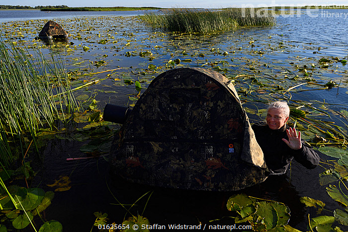 Photographer Katja Ronkainen in water with floating hide, Nemunas Delta Nature Reserve, Lithuania.  ,  Capturing An Image,Photographing,People,Photographer,Photographers,Europe,Eastern Europe,East Europe,Baltic Countries,Lithuania,Photography,Wetland,Reserve,Protected area,  ,  Staffan Widstrand