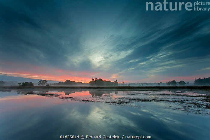 Cloudy sky and trees reflected in water before sunrise. Klein Schietveld, Brasschaat, Belgium. September 2014.  ,  Europe,Western Europe,Belgium,Plant,Tree,Reflection,Sky,Cloud,Weather,Overcast,Landscape,Freshwater,Water,Dawn,Brasschaat,  ,  Bernard Castelein
