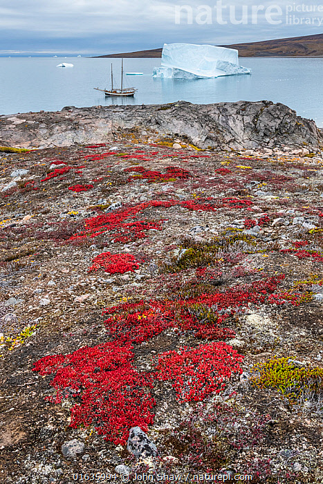 Autumn tundra colors and icebergs, Charcot Havn, Milne Land, Scoresby Sund, Greenland, September.  ,  Boat,Ocean,Arctic Ocean,Landscape,Autumn,Coast,Tundra,Marine,Coastal,Water,Saltwater,Kalaallit Nunaat,Greenland Sea,Scoresby Sund,  ,  John Shaw