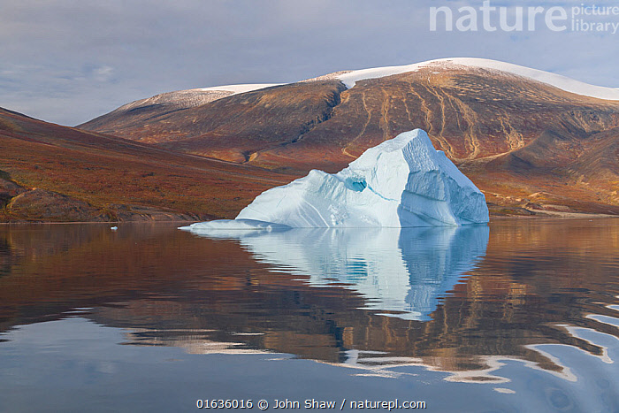 Iceberg and reflection, in Rode Fjord (Red Fjord), Scoresby Sund, Greenland, August.  ,  Ripple,Rippled,Reflection,Ice,Iceberg,Icebergs,Ocean,Arctic Ocean,Coast,Marine,Coastal,Water,Saltwater,Kalaallit Nunaat,Greenland Sea,Scoresby Sund,  ,  John Shaw