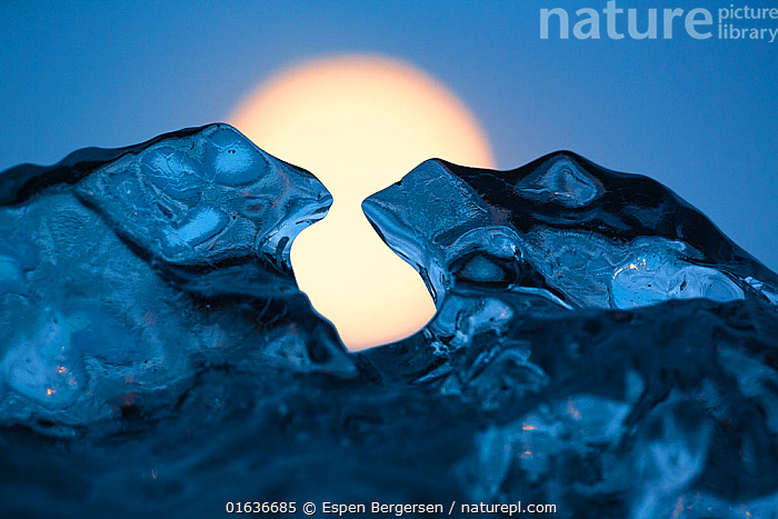 Ice sculpture formed like toads. Full moon in background. Iceland, May., Thawing,Europe,Northern Europe,North Europe,Nordic Countries,Scandinavia,Iceland,Moon,Full Moon,Ice,Glacier,Coast,Coastal,Arty shots,, Espen Bergersen