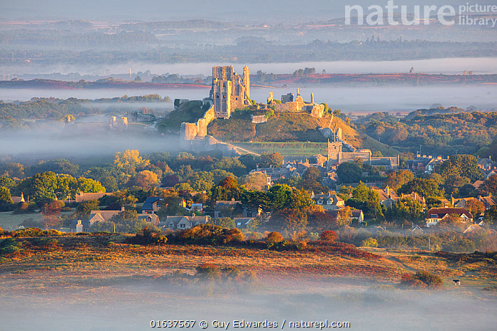 Corfe Castle in early morning mist, Dorset, England, UK, September.  ,  Building,Build,Europe,Western Europe,UK,Great Britain,England,Dorset,Horizontal,Building,Historic Building,Castle,Castles,Ruins,Ruin,Weather,Mist,Landscape,Autumn,Construction,Isle of Purbeck,Corfe,  ,  Guy Edwardes