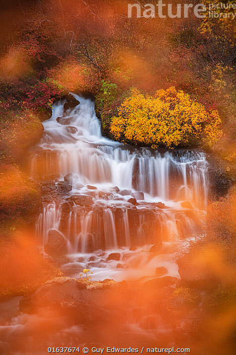Long exposure of Hraunfossar in autumn, Hvita River, Iceland  ,  Colour,Orange,Europe,Northern Europe,North Europe,Nordic Countries,Scandinavia,Iceland,Horizontal,Photographic Effect,Long Exposure,Plant,Leaf,Foliage,Tree,Flowing Water,Waterfall,River,Landscape,Autumn,Freshwater,Water,Catalogue13,Catalogue13  ,  Guy Edwardes