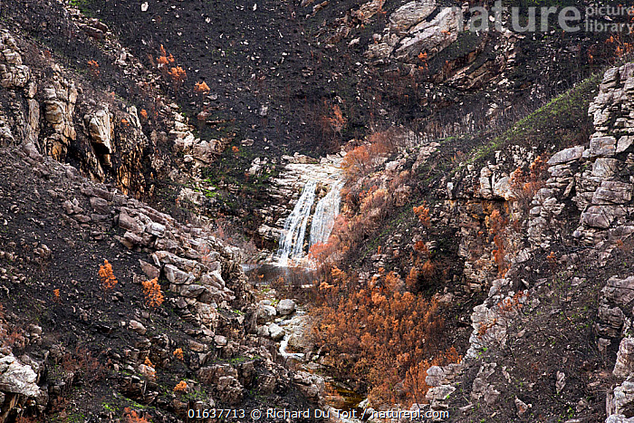 Waterfall at Montagu Pass, Outeniqua Mountains, Western Cape Province, South Africa. Fynbos habitat scorched and damaged by fires in September 2018. Photo taken December 2018.  ,  Damaged,Burnt,Africa,Southern Africa,South Africa,Fire,Mountain,Flowing Water,Waterfall,Freshwater,Water,Cape floristic region,Biodiversity hotspots,Biodiversity hotspot,Fynbos,South African,  ,  Richard Du Toit