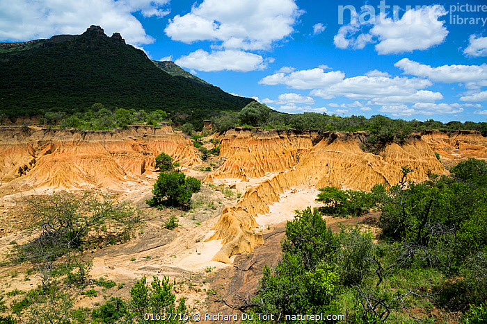 A donga or steep-sided ravine caused by erosion, Itala Game Reserve, KwaZulu-Natal, South Africa. Dongas are usually dry except in the rainy season.  ,  Erosion,Africa,Southern Africa,South Africa,Landscape,South African,KwaZulu-Natal Province,Itala Game Reserve,  ,  Richard Du Toit
