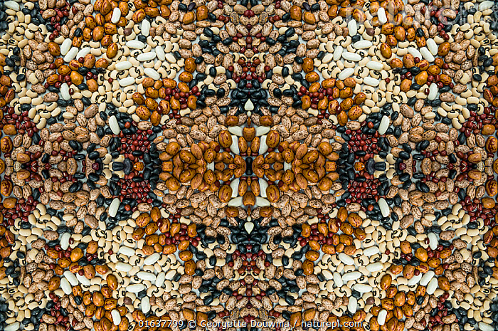 Kaleidoscopic image of a variety of pulses.  ,  Pattern,Plant,Seed,Seeds,Food,Vegetable,Vegetables,Legume,Legumes,Pulse,Kaleidoscope,Kaleidoscopic,  ,  Georgette Douwma