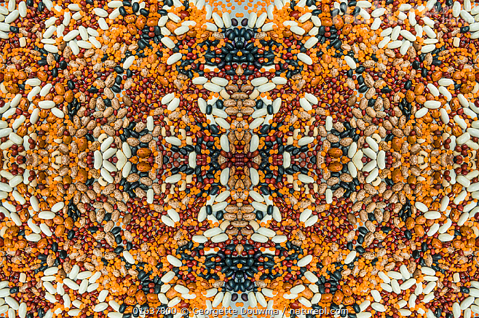 Kaleidoscopic image of a variety of pulses.  ,  Catalogue13,Pattern,Plant,Seed,Seeds,Food,Vegetable,Vegetables,Legume,Legumes,Pulse,Catalogue13,Kaleidoscope,Kaleidoscopic,Foods  ,  Georgette Douwma