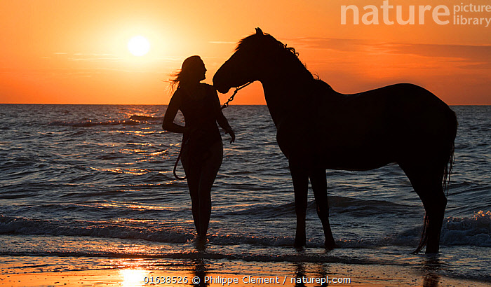 Horse rider leaving the water with horse on the beach at sunset along the North Sea coast, Belgium. Model released  ,  female,horse rider,horserider,horse riding,horsewoman,rider,riders,ride,horses,woman,walk,walking,horse,riding,horseback,sand,sandy,beach,North Sea,sea,water,Belgian,coast,summer,domestic animal,outdoors,sport,recreation,leisure,equestrian sport,equitation,shore,shoreline,coastline,people,travel,tourism,horseback riding,Belgium,evening,sunset,orange sky,sun,silhouette,silhouettes,silhouetted,,Equus ferus caballus,Equus caballus,People,Woman,Europe,Western Europe,Belgium,Animal,Sunset,Setting Sun,Sunsets,Coast,Coastal,Domestic animal,Domestic Horse,Domesticated,Equus ferus caballus,Equus caballus,Dusk,Horse,Mammal,Catalogue13,Catalogue13  ,  Philippe Clement