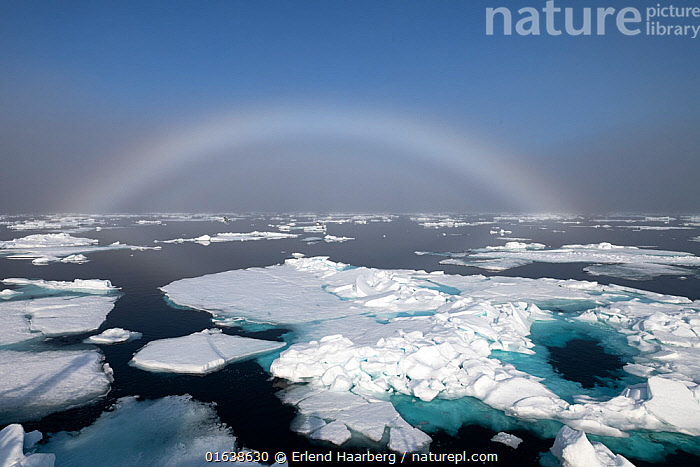 Fogbow over sea ice. Fogbows are similar to a rainbow, but produced by very small droplets in fog or cloud, which diffract light, instead of large raindrops which do not, Svalbard, Norway, July.  ,  Arctic,Europe,Northern Europe,North Europe,Nordic Countries,Scandinavia,Norway,Svalbard,Ice,Iceberg,Icebergs,Ocean,Arctic Ocean,Marine,Water,Saltwater,Sea,Phenomenon,Interesting,Sea ice,Fog Bow Effect,Arctic,Catalogue13,Catalogue13  ,  Erlend Haarberg