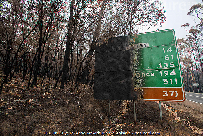 Burned forest and road sign in Mallacoota, Australia. This area was devastated by the bushfire a month before this image was taken, leaving much of the native wildlife suffering from traumatic injuries and at risk of starvation due to loss of habitat. January 2020., Damaged,Burnt,Destruction,Australasia,Australia,Victoria,Information,Natural Disaster,Forest Fire,Forest Fires,Environment,Environmental Issues,Global Warming,Greenhouse Effect,Climate change,, Jo-Anne McArthur / We Animals