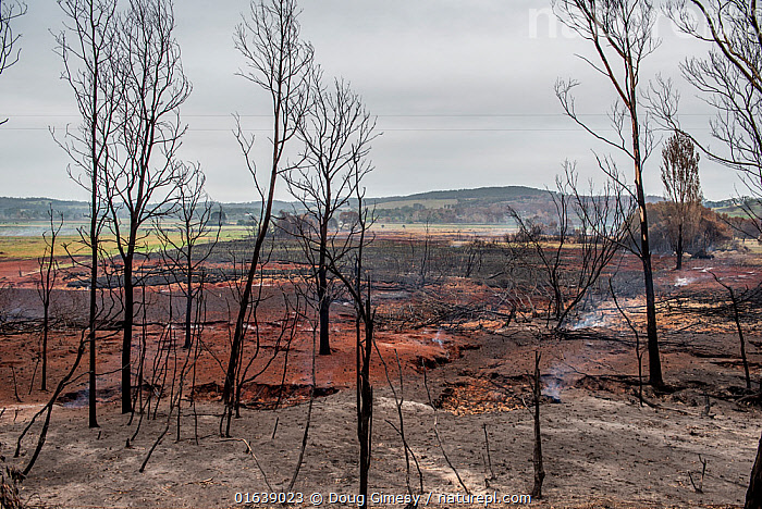 The smoke from underground peat continuing to burn rises into the air at Sarsfield, days after bushfires destroyed much of the town and native habitat. Sarsfield, Victoria, Australia. January, 2020, peat,,,,Damaged,Burnt,Australasia,Australia,Victoria,Plant,Tree,Fire,Natural Disaster,Forest Fire,Forest Fires,Smoke,Landscape,Environment,Environmental Issues,Global Warming,Greenhouse Effect,Climate change,Wildfire,Wild fire,Wild fires,Bush Fire,, Doug Gimesy