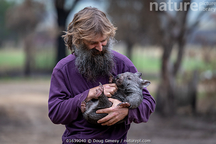 Portrait of Joseph Henderson holding a male bare-nosed wombat (Vombatus ursinus(. He and his partner, Rena, had to evacuate the wildlife (wombats, kangaroos and possums) from their home and wildlife shelter in Goongerah, Victoria. when bushfires threatened and then destroyed it in December 2019. They are now living at Rena's mother house in Sarsfield, which was also nearly destroyed in the fires. They plan to move back and rebuild their home and wildlife shelter when the roads are open again. Sarsfield, Victoria, Australia. January 2020. Editorial use only., Animal,Wildlife,Vertebrate,Mammal,Marsupial,Wombat,Common wombat,Animalia,Animal,Wildlife,Vertebrate,Mammalia,Mammal,Marsupialia,Marsupial,Vombatidae,Wombat,Vombatus,Vombatus ursinus,Common wombat,Vombatus fossor,Vombatus fuscus,Vombatus wombat,People,Man,Care,Caring,Rescue,Rescues,Rescuing,Saving,Australasia,Australia,Victoria,Fire,Natural Disaster,Forest Fire,Forest Fires,Environment,Environmental Issues,Global Warming,Greenhouse Effect,Conservation,Animal rehabilitation,Rehabilitation,Climate change,Wildlife conservation,Wildfire,Wild fire,Wild fires,Bush Fire,, Doug Gimesy