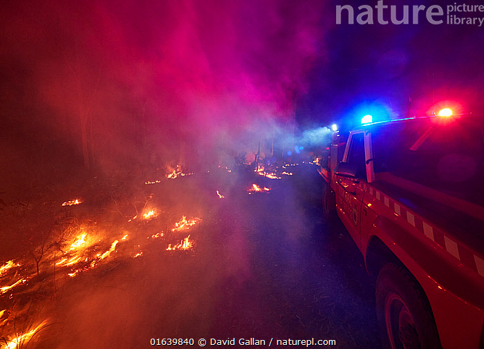 Angledale Rural Fire Service brigade patrolling a backburn to protect the edge of Bermagui township, New South Wales, Australia. January 2020., Burning,People,Emergency Service Occupation,Firefighter,Destruction,Australasia,Australia,New South Wales,Fire,Flame,Natural Disaster,Forest Fire,Forest Fires,Night,Emergency Service,Emergency Services,Fire Department,Forest,Controlled Fire,, David Gallan