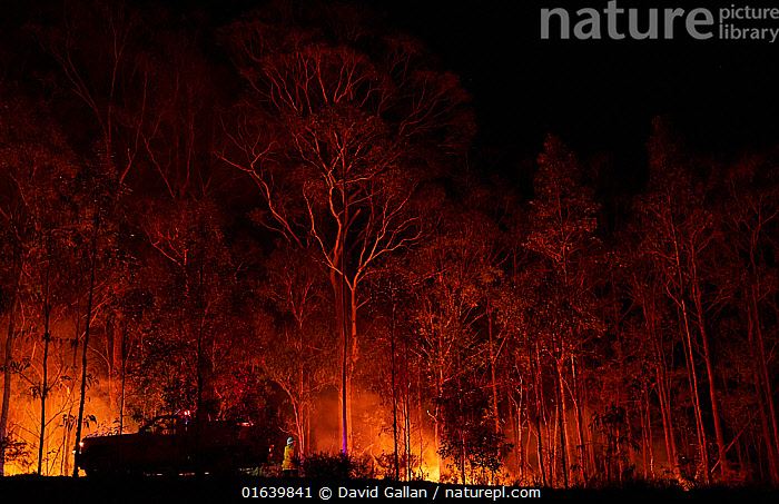 A member of the Angledale Rural Fire Service brigade patrolling a backburn to protect the edge of Bermagui township, New South Wales, Australia. January 2020., Burning,People,Emergency Service Occupation,Firefighter,Destruction,Australasia,Australia,New South Wales,Fire,Flame,Natural Disaster,Forest Fire,Forest Fires,Night,Emergency Service,Emergency Services,Fire Department,Defensive,Forest,Defense,Defence,Defending,Controlled Fire,, David Gallan
