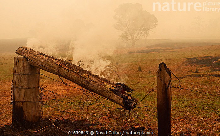 Farmland in the wake of a bushfire near Cobargo, New South Wales, Australia. January 2020., Damaged,Destruction,Australasia,Australia,New South Wales,Boundary,Fence,Fire,Agricultural Land,Cultivated Land,Natural Disaster,Forest Fire,Forest Fires,Smoke,Farmland,Smouldering,, David Gallan