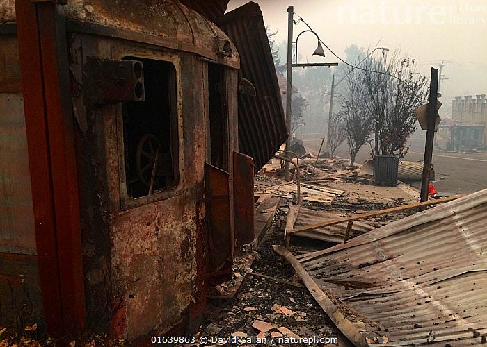 A gutted train cafe in the main street of Cobargo, New South Wales, Australia. Damage caused by December 2019 bushfires., Damaged,Burnt,Destruction,Australasia,Australia,New South Wales,Building,Natural Disaster,Forest Fire,, David Gallan