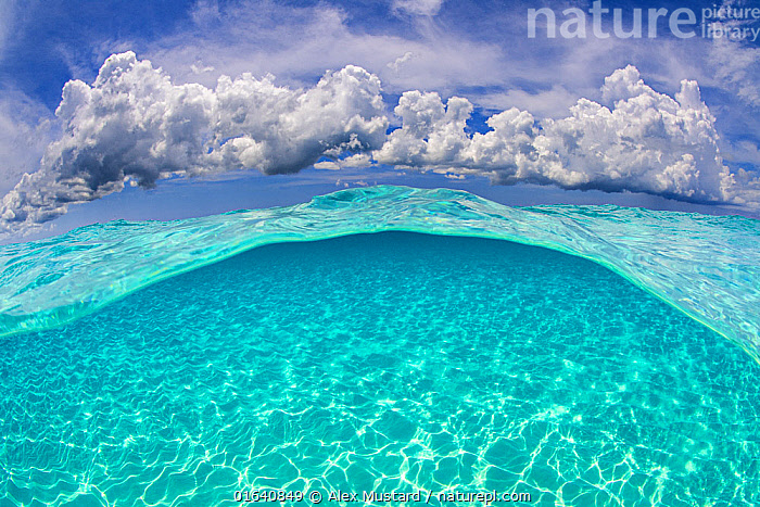 Light patterns on the seabed and fluffy cumulus clouds in the sky in a split level image. North Sound, Grand Cayman, Cayman Islands, British West Indies. Caribbean Sea., Clean,Colour,Blue,Turquoise,Transparent,The Caribbean,Caribbean,Cayman Islands,West Indies,Tropical,Seabed,Sky,Cloud,Low Cloud,Cumulus,Ocean,Caribbean Sea,Marine,Water,Saltwater,Biodiversity hotspots,Grand Cayman,, Alex Mustard