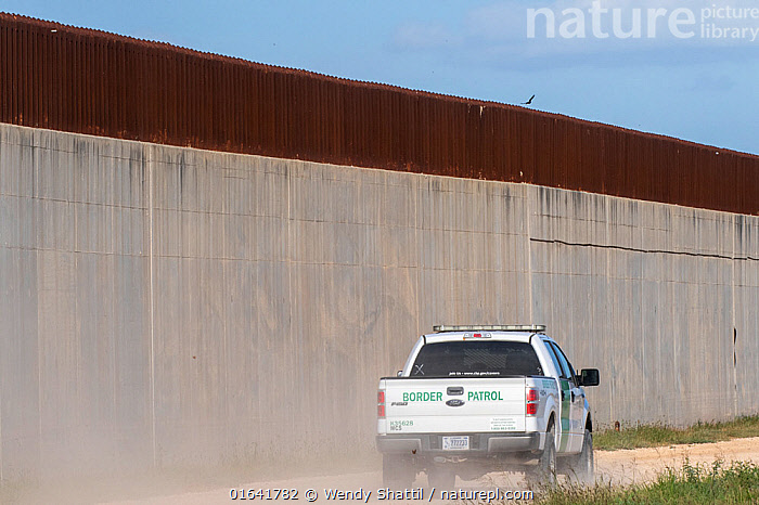 Border patrol driving on no-man's land side of 30 foot concrete and steel border wall. On private farm, Mission, Hidalgo County, Texas, USA. 2019.  ,  American,Patrol,Patroling,Patrols,North America,USA,Southern USA,Texas,Geographical Border,Wall,Land Vehicle,Motor Vehicle,Truck,Lorries,Lorry,Trucks,American,United States of America,Hidalgo County,Mission,  ,  Wendy Shattil