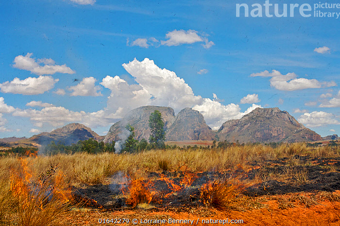 Burning grassland near the massif of the Three Sisters, granitic inselbergs, Madagascar.  ,  Africa,Madagascar,Malagasy Republic,Republic of Madagascar,Fire,Mountain,Landscape,Geology,Biodiversity hotspots,Biodiversity hotspot,Wildfire,Wild fire,Wild fires,  ,  Lorraine Bennery