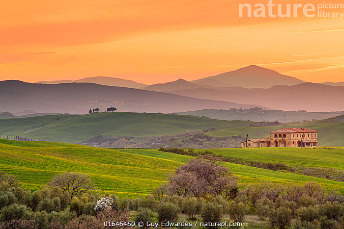 Tuscan farmhouse in the Val d'Orcia at sunrise, near Pienza, Tuscany, Italy. April 2010.  ,  Europe,Southern Europe,Italy,Tuscany,Tuscanny,Farm,Farms,Building,Residential Structure,House,Houses,Farmhouse,Farmhouses,Sunrise,Landscape,Beautiful,Countryside,Dawn,  ,  Guy Edwardes