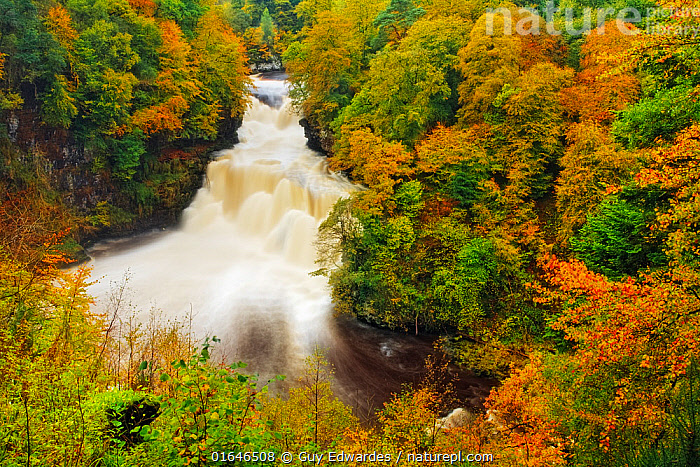 Autumn colour around the Falls of Clyde, Lanarkshire, Scotland, UK, October 2006.  ,  Europe,Western Europe,UK,Great Britain,Scotland,Photographic Effect,Long Exposure,Flowing Water,Waterfall,Landscape,Autumn,Freshwater,Water,Forest,Lanarkshire,  ,  Guy Edwardes