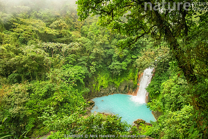 View of the Rio Celeste waterfall, tropical rainforest of Tenorio Volcano National Park, Costa Rica. The blue color arises due to a physical phenomenon known as Mie scattering triggered by the presence of certain minerals in the river's water.  ,  Adventure,Colour,Blue,February,Latin America,Central America,Costa Rica,Flowing Water,Waterfall,Rainforest,Tropical rainforest,Freshwater,Water,Reserve,Forest,Biodiversity hotspot,Protected area,National Park,Interesting,  ,  Nick Hawkins