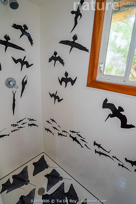 Fibreglass shower decorated with decals of photographer Tui De Roy's images. Taken during the Covid-19 lockdown, in Tui De Roy's tiny house consisting of three 20ft shipping containers. Santa Cruz Island, Galapagos Islands April 2020  ,  Latin America,South America,Galapagos Islands,Galapagos,Art,Equipment,Household Equipment,Household Fixture,Shower,Showers,Garden,Building,Residential Structure,House,Houses,Home Interior,Hygiene Room,Hygiene Rooms,Bathroom,Bathrooms,Washroom,Washrooms,Animals in art,Animals-in-art,Biodiversity hotspot,Galapagos National Park,UNESCO World Heritage Site,  ,  Tui De Roy