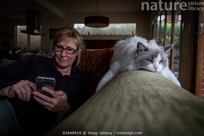 Portrait of female rag doll cat , Chloe, relaxing on a couch whilst her owner, checks her phone. Brighton, Victoria, Australia. April 2020. Model released.  ,  Felis catus,People,Woman,Relaxation,Australasia,Australia,Victoria,Animal,Furnishing,Furniture,Seat,Sofa,Indoors,Domestic animal,Pet,Domestic Cat,Ragdoll,Domesticated,Felis catus,Cat,  ,  Doug Gimesy