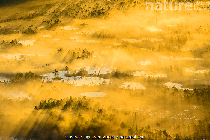 Aerial view of a golden and foggy sunrise over a bog area, Alam-Pedja National Park, Tatrumaa county, Southern Estonia. May.  ,  Colour,Yellow,Europe,Eastern Europe,East Europe,Baltic Countries,Estonia,Aerial View,High Angle View,Landscape,Wetland,Bog,Reserve,Protected area,National Park,Elevated view,  ,  Sven Zacek