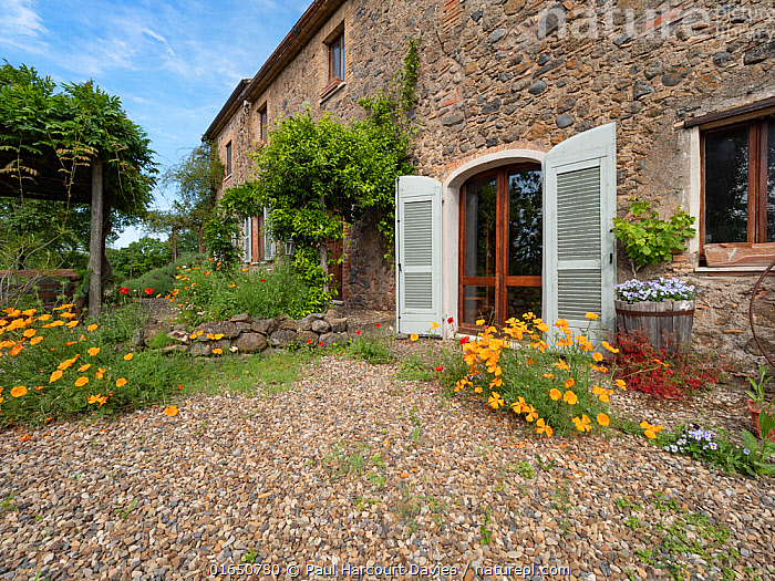 Home of photographer Paul Harcourt Davies, with many garden full of self-seeded flowers. Podere Montecucco, Umbria, Italy, June.  ,  Homes,Europe,Southern Europe,Italy,Umbria,Plant,Flower,Garden,Building,Residential Structure,House,Houses,Homes,Covid lockdown,  ,  Paul  Harcourt Davies