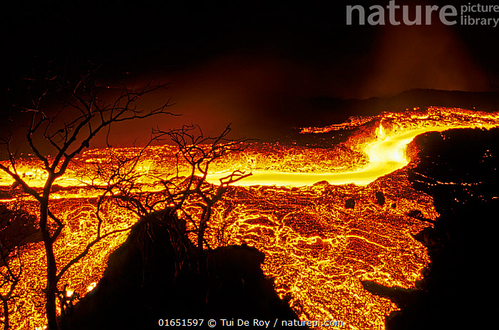 Lava flow in Fernandina Island, Galapagos Islands. Lava flowing at speed of water runs past old stand of Bursera graveolens trees on previously vegetated cone (February 1995),  ,  Erupting,Colour,Orange,Latin America,South America,Galapagos Islands,Galapagos,Volcano,Lava,Night,Geology,Volcanic features,Biodiversity hotspot,Dramatic,Galapagos National Park,UNESCO World Heritage Site,  ,  Tui De Roy