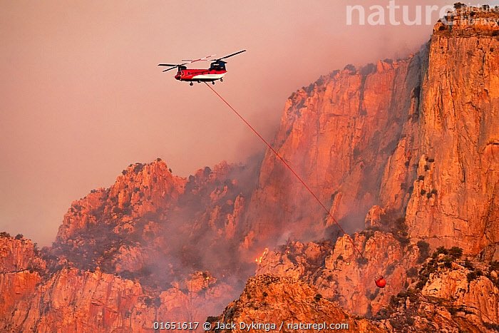 Lightning started fire on steep craggy terrain, with US Forest Service Fire suppression Wildland Firefighters using helicopters to 'bomb' the hot spots to control the spread. Pusch Ridge, Santa Catalina Mountains, Coronado National Forest, Arizona, USA. 6th June. June 2020.  ,  American,Burning,Crisis,Destruction,North America,USA,Western USA,Southwest USA,Arizona,Aircraft,Helicopters,Fire,Mountain,Smoke,Landscape,Emergency,Emergency Service,Emergency Services,Fire Department,Reserve,Protected area,National Forest,Wildfire,Wild fire,Wild fires,American,United States of America,Santa Catalina Mountains,  ,  Jack Dykinga