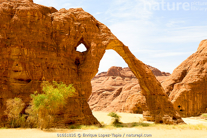 Elephant arch - eroded sandstone rock formation in the Ennedi Natural And Cultural Reserve, UNESCO World Heritage Site, Sahara Desert, Chad. September 2019.  ,  Africa,Central Africa,Chad,Building,Arch,Arches,Archs,Archway,Archways,Vaulted,Rock Formations,Desert,Sahara Desert,Sahara,Rock,Sandstone,Landscape,Geology,Protected area,UNESCO World Heritage Site,Landform,  ,  Enrique Lopez-Tapia