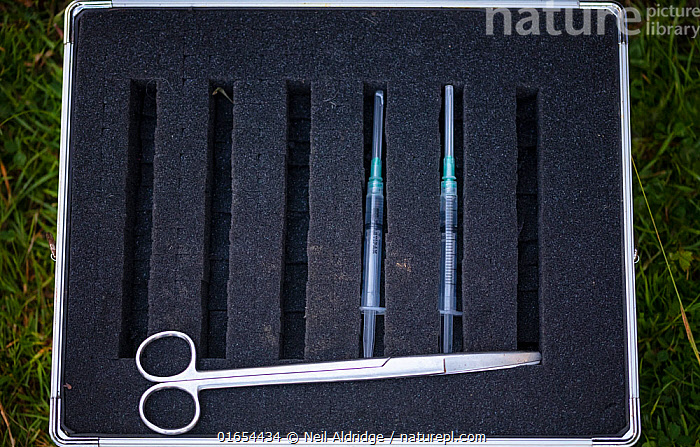 A case with two syringes containing TB vaccine for badgers and a pair of scissors being used during a European badger vaccination programme in North Somerset, UK. Badger vaccination programmes are being carried out in England as a means of controlling the spread of TB between badgers and cattle, and as a viable alternative to the controversial government-sanctioned cull of badgers.  ,  Animal,Wildlife,Vertebrate,Mammal,Carnivore,Mustelid,Badger,Animalia,Animal,Wildlife,Vertebrate,Mammalia,Mammal,Carnivora,Carnivore,Mustelidae,Mustelid,Meles,Badger,Meles meles,Eurasian Badger,Protection,Research,Researching,Two,Europe,Western Europe,UK,Great Britain,England,Somerset,Container,Containers,Briefcase,Attache Case,Attache Cases,Briefcases,Case,Cases,Equipment,Medicine,Vaccine,Surgical Equipment,Medical Instrument,Syringe,Butterfly Needle,Butterfly Needles,Hypodermic Needle,Hypodermic Needles,Hypodermic Syringe,Hypodermic Syringes,Injector,Injectors,Needle,Needles,Syringes,Surgical Needle,Surgical Needles,Work Tool,Tool,Tools,Work Tools,Shears,Shear,Scissors,Environment,Environmental Issues,Science,Conservation,Disease,Agricultural issues,Protector,Controversial,  ,  Neil Aldridge