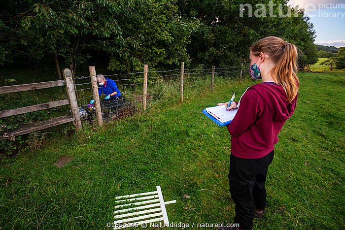 A volunteer records data while a vaccinator inoculates a European badger (Meles meles) against TB. North Somerset, UK. Badger vaccination programmes are being carried out in England as a means of controlling the spread of TB between badgers and cattle, and as a viable alternative to the controversial government-sanctioned cull of badgers.  ,  Wickets,,Animal,Wildlife,Vertebrate,Mammal,Carnivore,Mustelid,Badger,Animalia,Animal,Wildlife,Vertebrate,Mammalia,Mammal,Carnivora,Carnivore,Mustelidae,Mustelid,Meles,Badger,Meles meles,Eurasian Badger,People,Woman,Protection,Research,Researching,Europe,Western Europe,UK,Great Britain,England,Somerset,Equipment,Environment,Environmental Issues,Science,Conservation,Disease,Agricultural issues,Protector,Controversial,  ,  Neil Aldridge