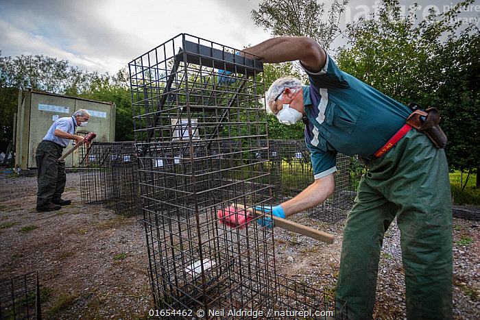 Cages used for trapping European badgers (Meles meles) for vaccination against TB are scrubbed. North Somerset, UK. Badger vaccination programmes are being carried out in England as a means of controlling the spread of TB between badgers and cattle, and as a viable alternative to the controversial government-sanctioned cull of badgers.  ,  Animal,Wildlife,Vertebrate,Mammal,Carnivore,Mustelid,Badger,Animalia,Animal,Wildlife,Vertebrate,Mammalia,Mammal,Carnivora,Carnivore,Mustelidae,Mustelid,Meles,Badger,Meles meles,Eurasian Badger,Cleaning,Scrubbing,Scrub,Scrubs,People,Man,Protection,Research,Researching,Europe,Western Europe,UK,Great Britain,England,Somerset,Brush,Brushes,Cage,Cages,Equipment,Trap,Traps,Clothing,Outerwear,Glove,Gloves,Environment,Environmental Issues,Science,Conservation,Disease,Agricultural issues,Protector,Controversial,  ,  Neil Aldridge