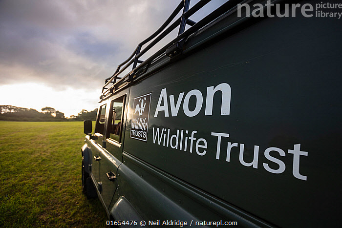 An Avon Wildlife Trust Land Rover on farmland at dawn during a programme to vaccinate European badgers (Meles meles) against TB in North Somerset, UK. Badger vaccination programmes are being carried out in England as a means of controlling the spread of TB between badgers and cattle, and as a viable alternative to the controversial government-sanctioned cull of badgers.  ,  Animal,Wildlife,Vertebrate,Mammal,Carnivore,Mustelid,Badger,Animalia,Animal,Wildlife,Vertebrate,Mammalia,Mammal,Carnivora,Carnivore,Mustelidae,Mustelid,Meles,Badger,Meles meles,Eurasian Badger,Research,Researching,Europe,Western Europe,UK,Great Britain,England,Somerset,Equipment,Land Vehicle,Motor Vehicle,Environment,Environmental Issues,Science,Conservation,Disease,Dawn,Agricultural issues,Controversial,Car,Automobile,  ,  Neil Aldridge
