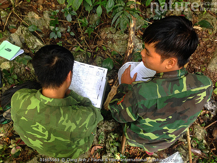 FFI staff and local ranger during 2018 Cao vit gibbon census. Cao vit gibbon Species & Habitat Conservation Area, Trung Khanh district, Cao Bang province, Vietnam. EDITORIAL USE ONLY. All uses require clearance. Image suitable for small reproduction only.  ,  Animal,Wildlife,Vertebrate,Mammal,Gibbon,Crested gibbons,Cao-vit gibbon,Animalia,Animal,Wildlife,Vertebrate,Mammalia,Mammal,Primate,Primates,Hylobatidae,Gibbon,Lesser Ape,Hominoidea,Nomascus,Crested gibbons,Recording,People,Man,Research,Researching,Asia,South East Asia,Vietnam,High Angle View,Document,Documents,Printed Media,Printed Medium,Publication,Book,Books,Note Pad,Note Pads,Note Paper,Note,Notebook,Notebooks,Notepad,Notepads,Conservation,Elevated view,Monitoring,Nomascus nasutus,Cao-vit gibbon,  ,  Cong Anh / Fauna & Flora International