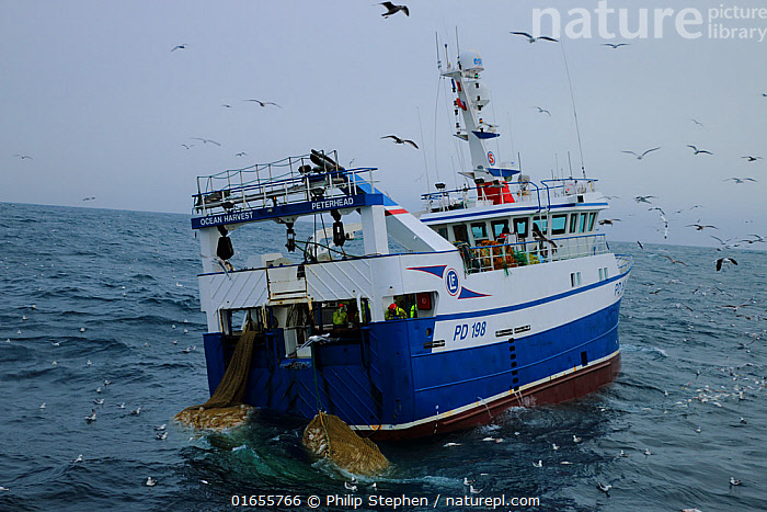 Ocean Harvest fishing trawler dragging net surrounded by gulls. North Sea.  ,  Boat,Fishing Boat,Ocean,Atlantic Ocean,Fishing Industry,Fishing Industries,Marine,Water,Working-boats,Saltwater,Sea,Fisheries,Fishery,Fishing,North Sea,  ,  Philip  Stephen