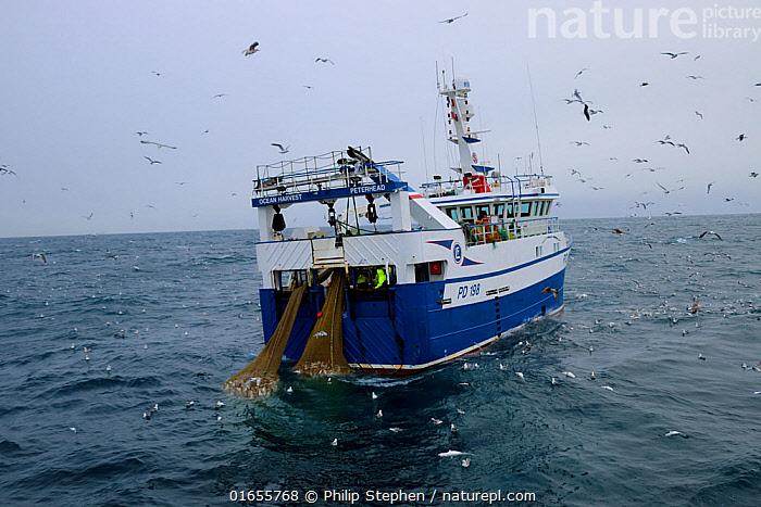 Ocean Harvest fishing trawler surrounded by gulls. North Sea. January 2019.  ,  Boat,Fishing Boat,Ocean,Atlantic Ocean,Fishing Industry,Fishing Industries,Marine,Water,Working-boats,Saltwater,Sea,Fisheries,Fishery,Fishing,North Sea,  ,  Philip  Stephen