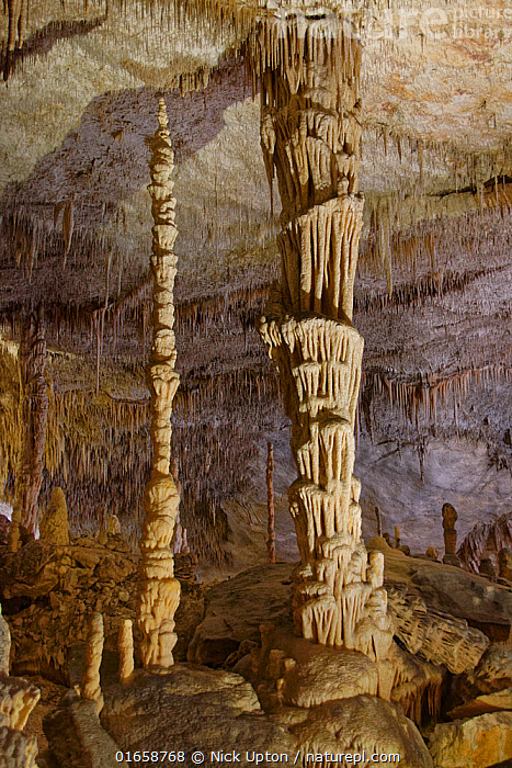 Limestone cave interior with spectacular ornate columns formed by hanging stalactites and rising stalagmites coalescing, Drach caves / Cuevas del Drach, Porto Cristo, Mallorca, August 2018.  ,  Balearic Islands,Majorca,Europe,Southern Europe,Spain,Cave,Rock Formations,Stalactites,Rock,Limestone,Geology,Stalagmite,Landform,  ,  Nick Upton
