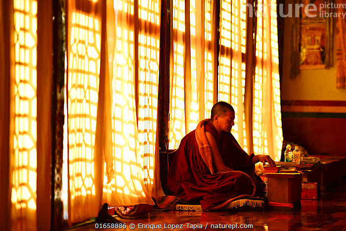 Buddhist lama in worship beside window, Sampheling Monastery, Kham, Tibet, China. 2016.  ,  Praying,Pray,Prayer,Prayers,Worship,Worshipping,People,Man,Religious Role,Buddhist,Buddhists,Monk,Monks,Mood,Calm,Asia,East Asia,China,Building,Monastery,Indoors,Religion,Eastern Religion,Eastern Religions,Buddhism,Kham,Chatreng,  ,  Enrique Lopez-Tapia