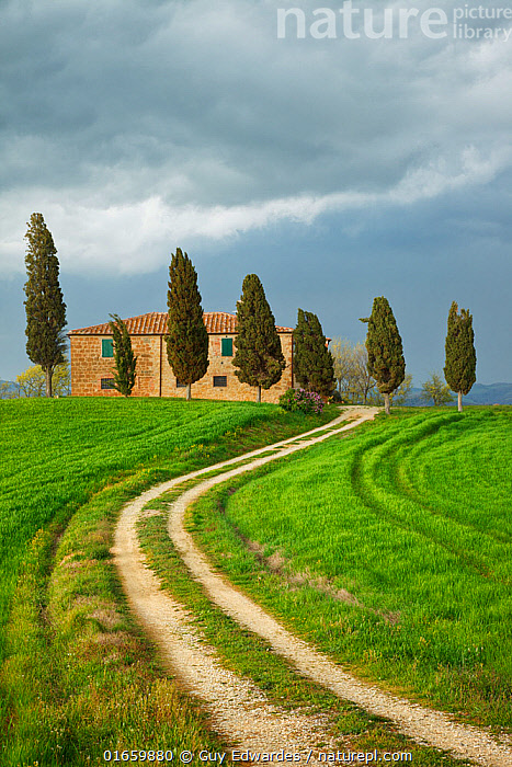 Drive through fields leading to farmhouse and Cypress trees. Val d'Orcia, near Pienza, Tuscany, Italy. April 2010.  ,  Plant,Vascular plant,Conifer,Cypress,Plantae,Plant,Tracheophyta,Vascular plant,Pinopsida,Conifer,Gymnosperm,Spermatophyte,Pinophyta,Coniferophyta,Coniferae,Spermatophytina,Gymnospermae,Cupressales,Cupressaceae,Cypress,Europe,Southern Europe,Italy,Tuscany,Tuscanny,Diminishing Perspective,Tree,Grounds,Ground,Driveway,Driveways,Path,Building,Residential Structure,House,Houses,Farmhouse,Farmhouses,Landscape,Coniferous,Track,Tree,Trees  ,  Guy Edwardes