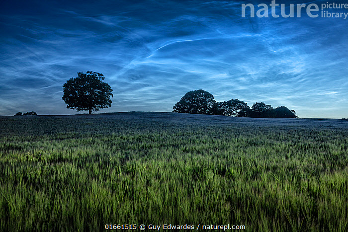 Landscape of farmland at night, Dorchester, Dorset, England, UK. June 2020.  ,  Europe,Western Europe,UK,Great Britain,England,Dorset,Agricultural Land,Cultivated Land,Field,Landscape,Countryside,Farmland,Dusk,  ,  Guy Edwardes