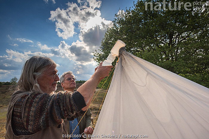 Biologists from Radboud University and Entomological Society Krefeld collecting specimens from malaise trap. Long-term monitoring has revealed a 75% decline in insect biomass over 27 years. Germany, May 2019.  ,  Animal,Wildlife,Arthropod,Insect,Animalia,Animal,Wildlife,Hexapoda,Arthropod,Invertebrate,Hexapod,Arthropoda,Insecta,Insect,People,Man,Scientist,Scientists,Life Scientist,Biologist,Biologists,Natural Science,Life Science,Ecology,Biology,Research,Researching,Europe,Western Europe,Germany,North Rhine Westphalia,Trap,Traps,Science,Fieldwork,Researcher,Ecologist,Krefeld,  ,  Edwin Giesbers