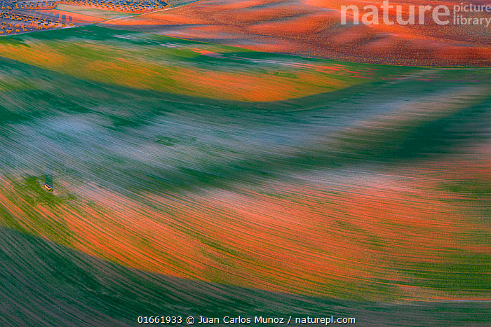 Aerial view of cereal fields, Toledo, Castilla-La Mancha, Spain.  ,  Colour,Colourful,Pattern,Europe,Southern Europe,Spain,Aerial View,High Angle View,Plant,Crops,Produce,Cultivated,Agricultural Land,Cultivated Land,Field,Landscape,Agriculture,Arty shots,Abstract,Abstracts,Farmland,Elevated view,Drone,Drone shot,Castilla-La Mancha,  ,  Juan Carlos Munoz