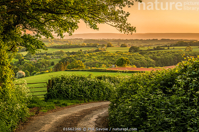 Welsh countryside landscape and country lane, Monmouthshire, Wales UK, May.  ,  Europe,Western Europe,UK,Great Britain,Wales,Road,Rural Road,Agricultural Land,Cultivated Land,Field,Landscape,Beautiful,Countryside,Farmland,Monmouthshire,Dawn,  ,  Phil Savoie